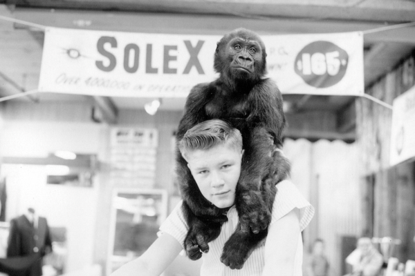 Larry Johnston & Ivan the Gorilla® circa 1964 at the B&I Circus Store